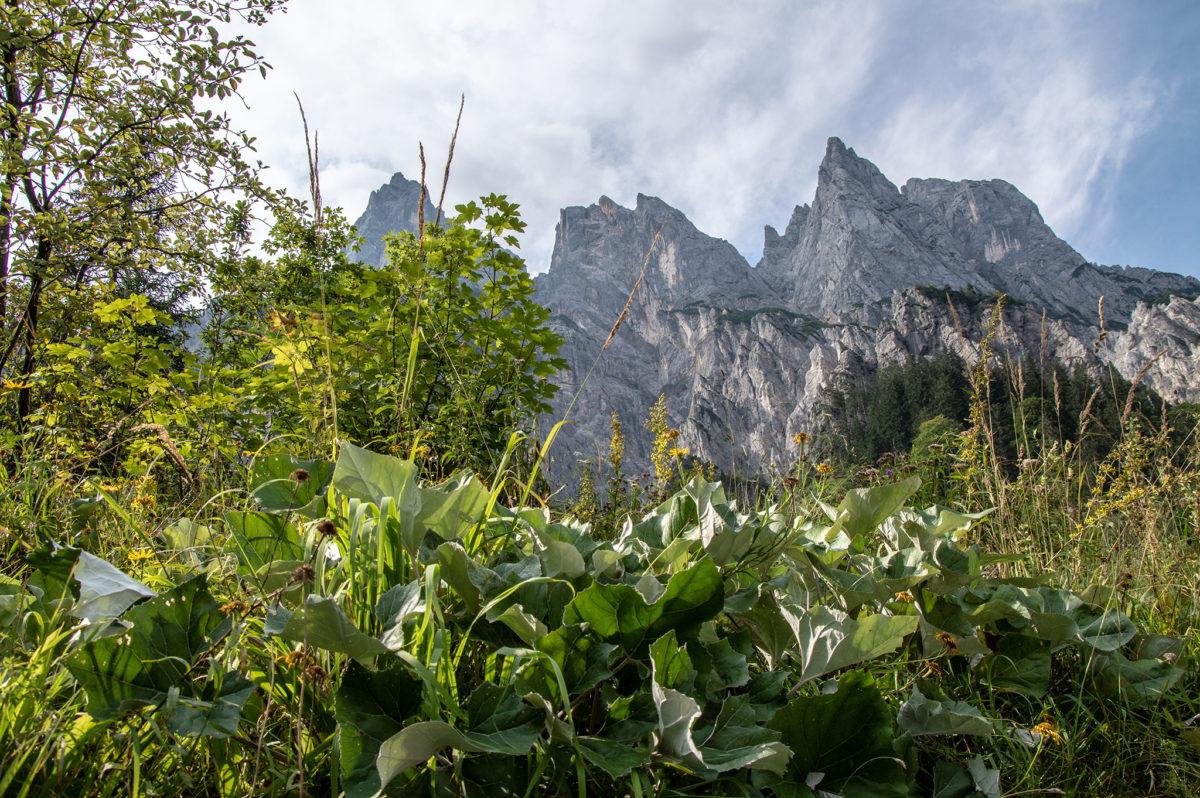 Blick hinauf zu den Mühlsturzhörnern | Ramsauer Dolomiten