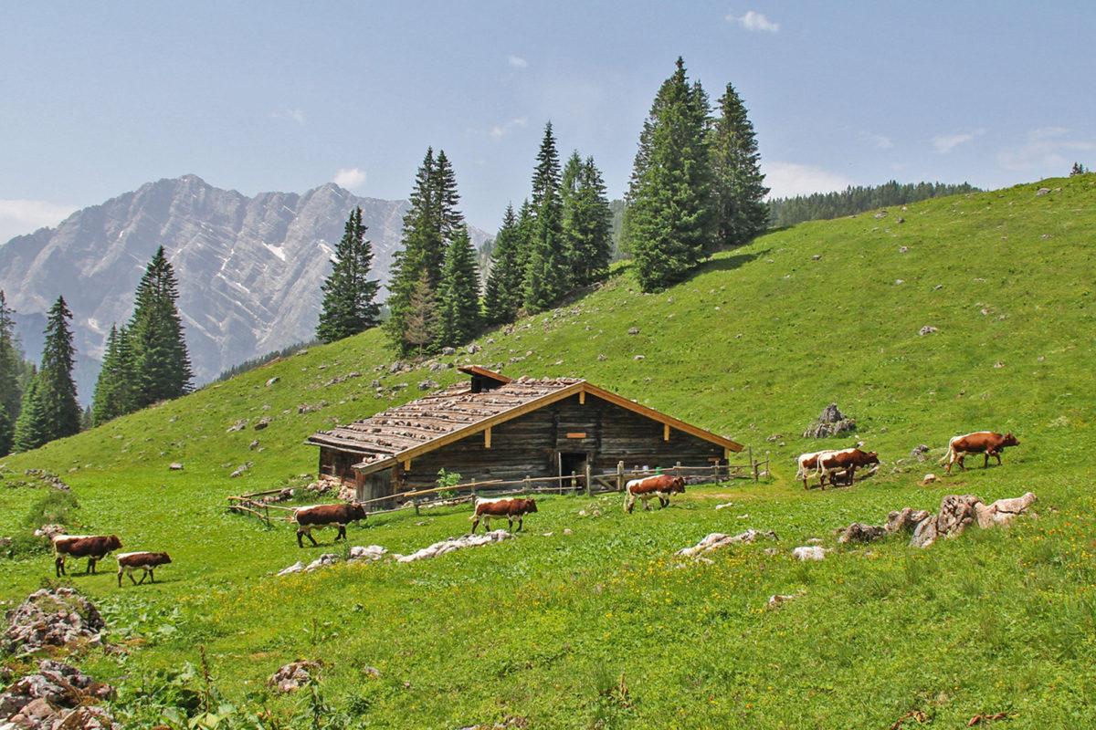 Die Regenalm im Nationalpark Berchtesgaden