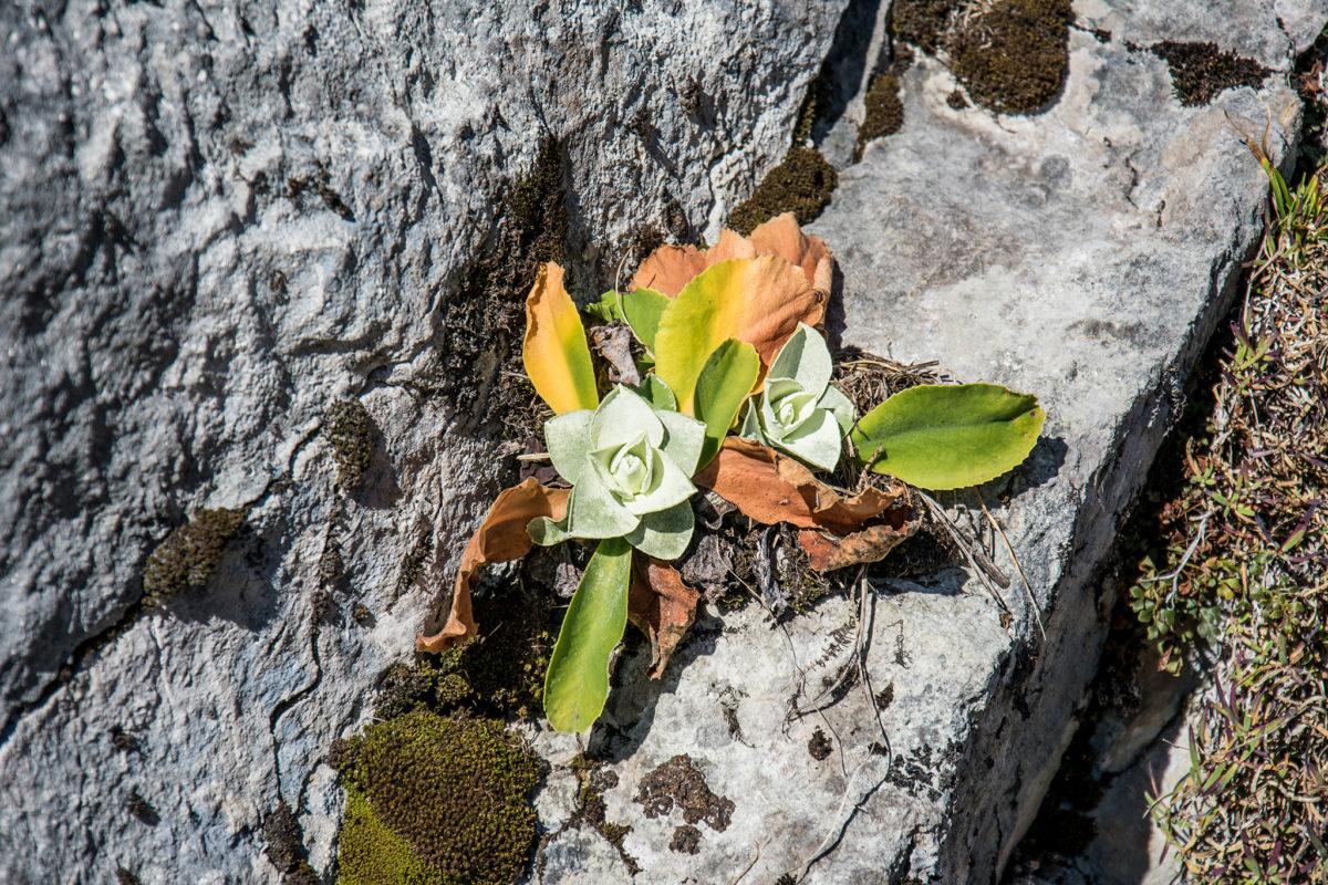 Pflanzen haben sich im Fels eingenistet