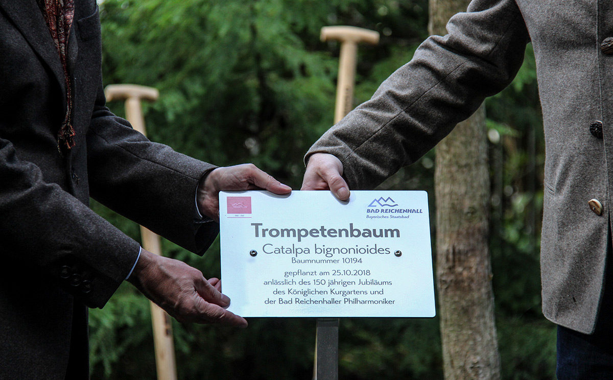 Ein Trompetenbaum für den Königlichen Kurgarten