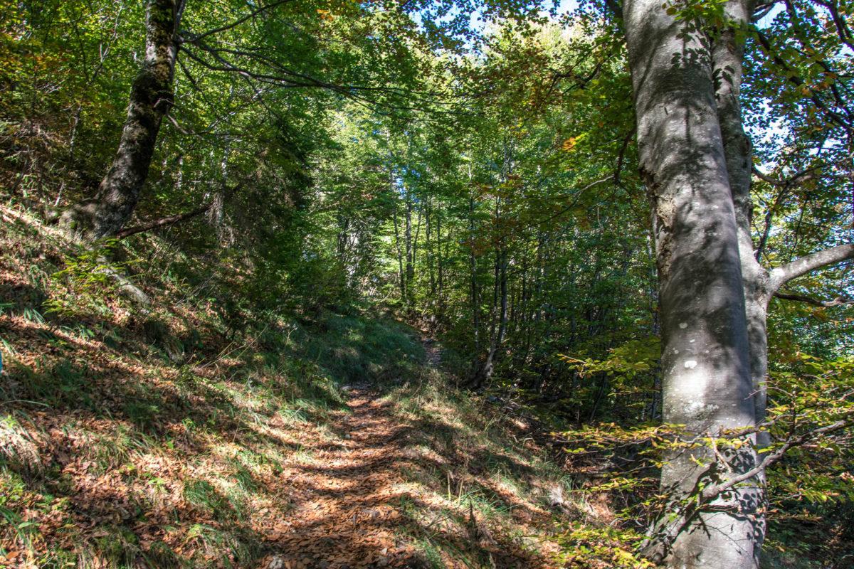 Durch lichten Wald geht's bergab