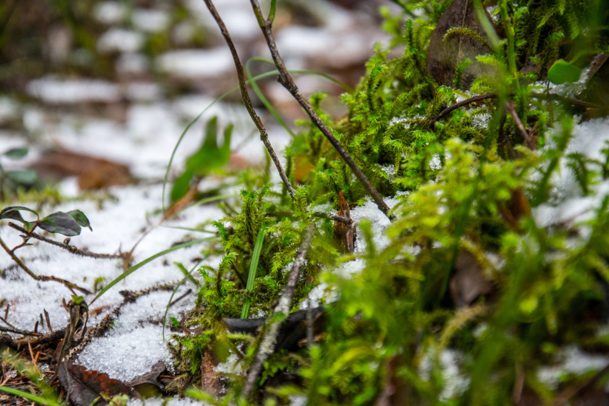 Schneereste im Zauberwald