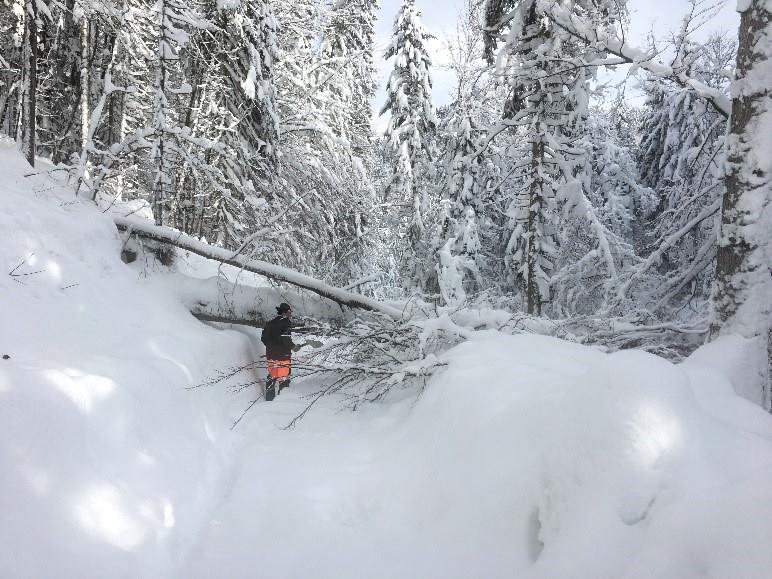 Schneebruch am Weg zum Wintergatter
