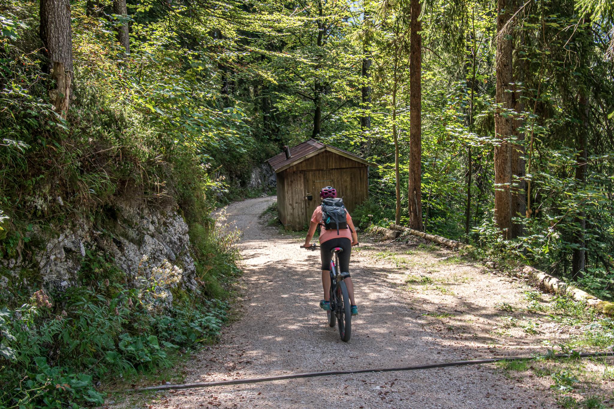 Abfahrt durch den Wald