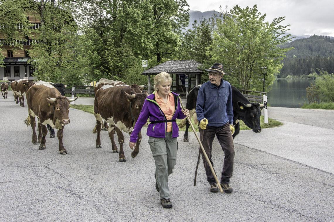 Sepp und Lieserl Wurm verbringen dieses Jahr ihren zehnten Sommer auf der Bindalm.